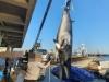 포항 '바다로또' 밍크고래 잡혀, 5천여만원 위판